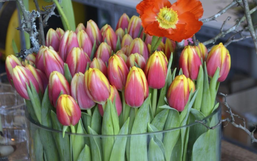 Tulpanens Dag firar 25-årsjubileum den 15 januari!