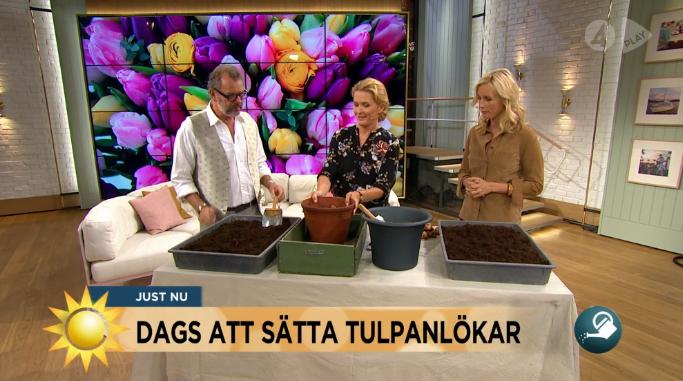 Jenny och Steffo planterar tulpaner