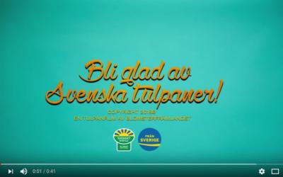 Bli glad av svenska tulpaner!